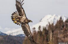 Виды орлов, их особенности, названия, образ жизни и фото птиц