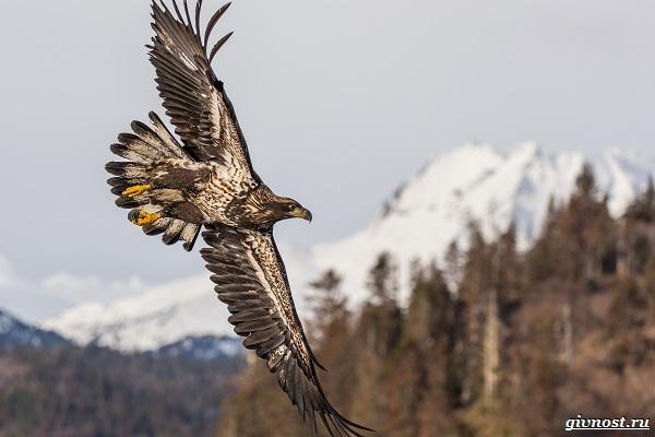 Виды-орлов-их-особенности-названия-образ-жизни-и-фото-птиц