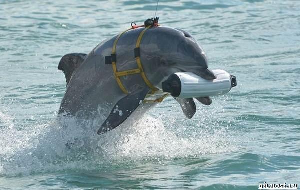 Интересные-факты-о-дельфинах-20