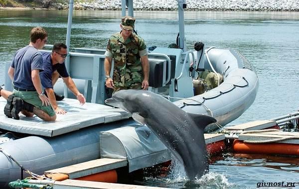 Интересные-факты-о-дельфинах-21