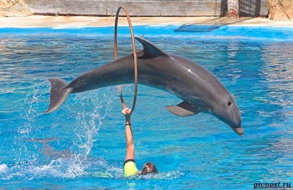 Интересные-факты-о-дельфинах-22