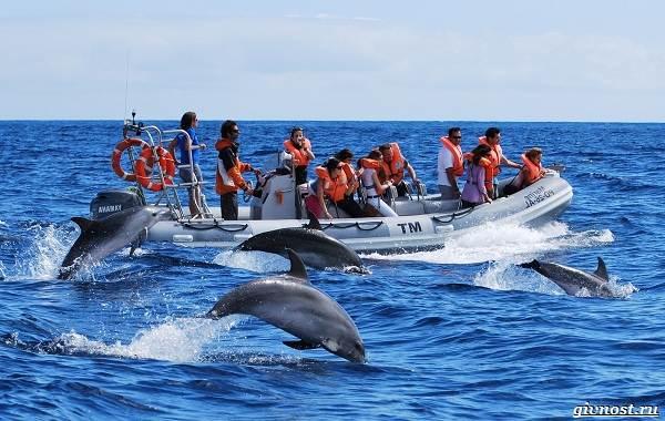 Интересные-факты-о-дельфинах-23