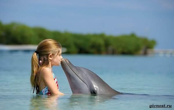 Интересные-факты-о-дельфинах-6