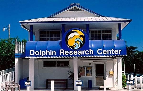 Интересные-факты-о-дельфинах--