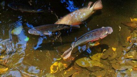 Пресноводные рыбы, их виды, названия, особенности и среда обитания
