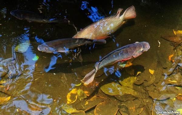 Пресноводные-рыбы-их-виды-названия-особенности-и-среда-обитания-1