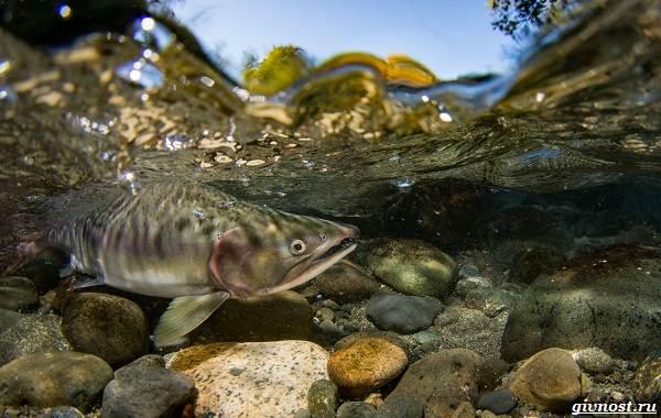 Пресноводные-рыбы-их-виды-названия-особенности-и-среда-обитания-21