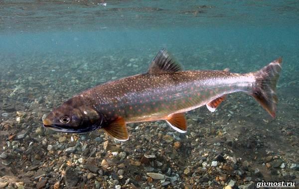 Пресноводные-рыбы-их-виды-названия-особенности-и-среда-обитания-22