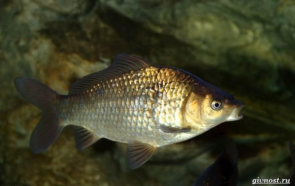 Пресноводные-рыбы-их-виды-названия-особенности-и-среда-обитания-3