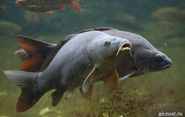 Пресноводные-рыбы-их-виды-названия-особенности-и-среда-обитания-4