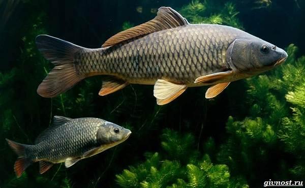 Пресноводные-рыбы-их-виды-названия-особенности-и-среда-обитания-5