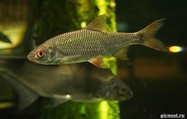 Пресноводные-рыбы-их-виды-названия-особенности-и-среда-обитания-6
