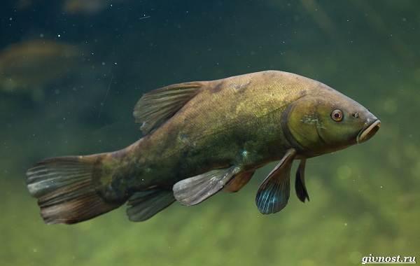 Пресноводные-рыбы-их-виды-названия-особенности-и-среда-обитания-8