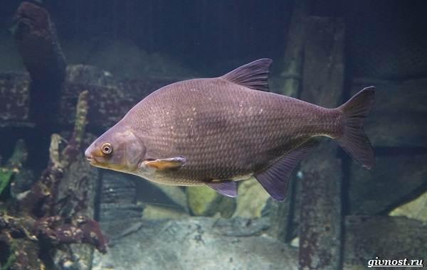 Пресноводные-рыбы-их-виды-названия-особенности-и-среда-обитания-9