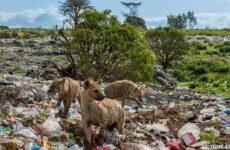 Охрана животных и её актуальные проблемы