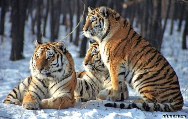 Охрана-животных-и-её-актуальные-проблемы-2
