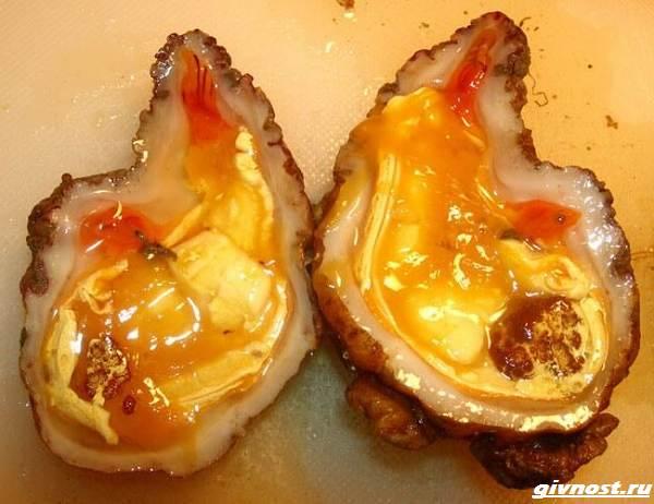Морской-лимон-моллюск-описание-особенности-и-среда-обитания-4