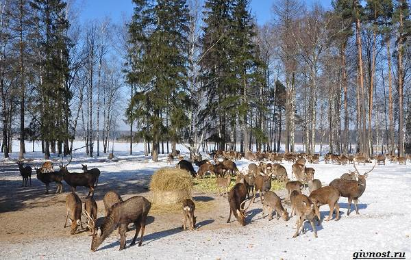 Заповедники-России-список-с-названиями-и-описанием-31